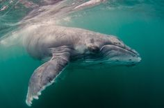 A first-of-its-kind study sheds light on the elusive subject of whale noises.