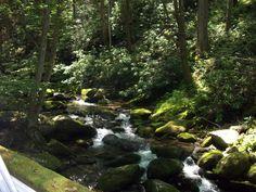 Roaring Forks Motor Trail part of the Smoky Mtns Park near Gatlinburg