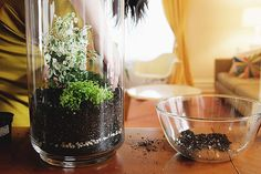 Another how to make a terrarium. I like the idea of adding rose quartz