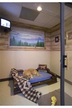 A Luxury Suite at Rover Oaks Pet Resort in Houston, Texas! A Luxury Suite at Rover Oaks Pet Resort in Houston, Texas! Dog Boarding Kennels, Dog Boarding Near Me, Pet Boarding, Luxury Dog Kennels, Dog Kennel Designs, Kennel Ideas, Houston, Dog Suit, Pet Hotel