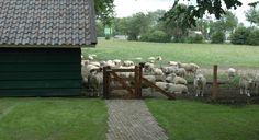 Siebers tuinprojecten boederij landelijk tuin oprijlaan paarden