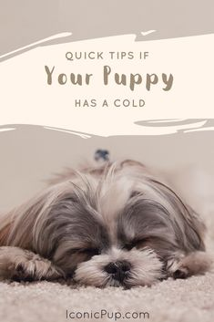 Keeping your puppy hydrated while fighting a cold will help them recover fast. Well, your puppy could be super active even while suffering from a cold. Although....