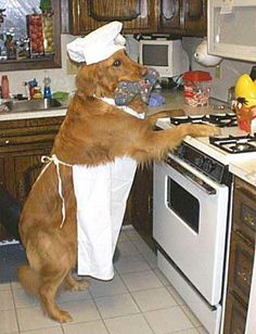 Cassie in the kitchen :), glad to see another dog can reach the stove top!!!