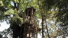 The 80 Best In The Trees Images On Pinterest Treehouse Treehouses