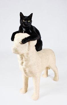 Who said a  scratching post couldn't be fun?