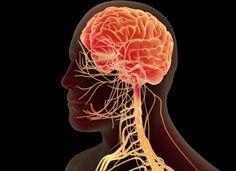 pneumonogastriko 1 Brain, The Brain