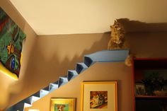 Picture of Curved cat stairs for your living room - the cutest idea ever.