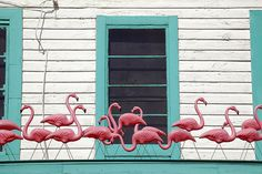 Pink Flamingos by ricko, via Flickr