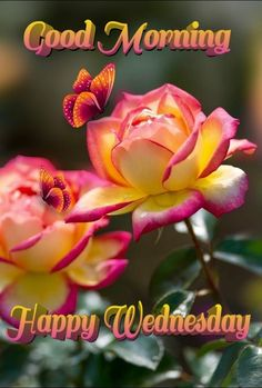 Good Morning Wednesday, Good Morning Happy, Happy Wednesday, Good Morning Quotes, Days Of Week, Mom, Wednesday, Mothers