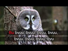Owl image taken by Earl Goodson