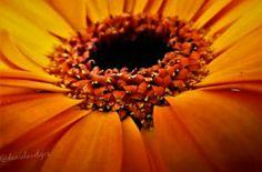 #flower #canon #macro #presov #slovakia