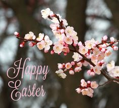Wishing you Happy Easter!