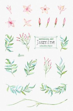 Jasmine. Botanical art. Floral Elements wreath by OctopusArtis