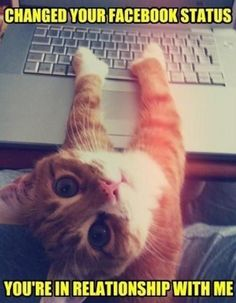Social media post (cute cat).