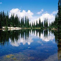 canada_lake_coast_trees_coniferous_water_transparent_reflection_7153_2048x2048.jpg (2048×2048)