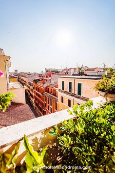 Rome city view from Hotel Madrid Roofgarden terrace Rome City, Trevi Fountain, Terrace, Madrid, Spanish, In This Moment, Mansions, House Styles, Garden