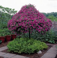 Construct a Wave Petunia Tree Trees of hardware and steel pipe show off Wave petunias and other annuals like ivy-leaf geraniums. These handyman garden projects generate creative landscape displays. Love Garden, Dream Garden, Lawn And Garden, Garden Pots, Container Plants, Container Gardening, Creative Landscape, Landscape Design, Low Maintenance Plants