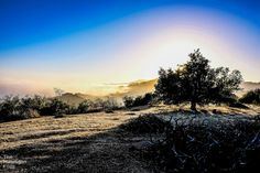in Topanga, United States. My place is in an oak forest in the mountains close to Topanga State Park and hiking. My photos were all taken by me around Topanga so you can see what it's like. -AirBnB- $125 per night- pic #2