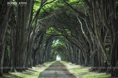 Photograph Pathway Found.... by Bobby Joshi on 500px