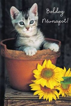 Névnap Birthday Greetings, Birthday Wishes, Birthday Cards, Happy Birthday, Happy Name Day, Holidays And Events, Cats And Kittens, Diy And Crafts, Image