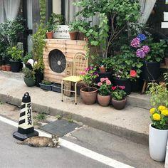 Aesthetic Japan, Japanese Aesthetic, Aesthetic Photo, Aesthetic Pictures, Aesthetic Backgrounds, Aesthetic Wallpapers, Theme Background, Pretty Pictures, Tokyo