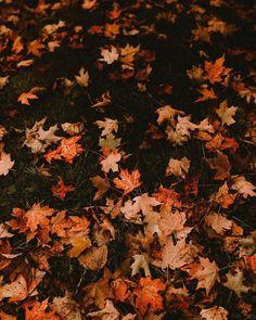 Halloween Night, Fall Halloween, Halloween Witches, Halloween Quotes, Halloween Halloween, Haunted House Props, Haunted Houses, Haunted Places, Autumn Cozy