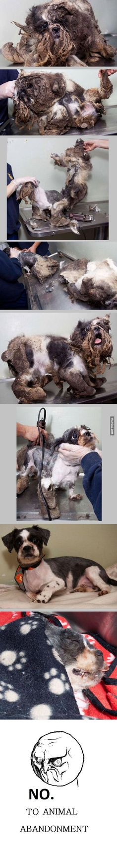 Doggie´s first haircut - 9GAG