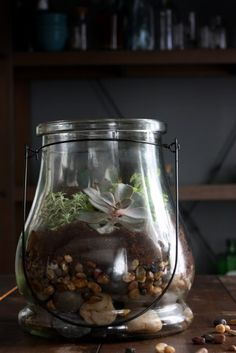 how-to-make-succulent-terrarium