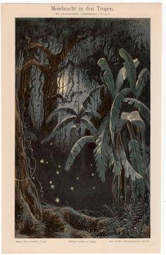 1894 fire flies in the tropics antique print by antiqueprintstore, $75.00