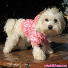 Dog Bomber Jackets in Pink Chuckie might look good in this!!!!