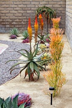Drought Tolerant Plants Design Ideas, Pictures, Remodel, and Decor - I want my yard to look like this!