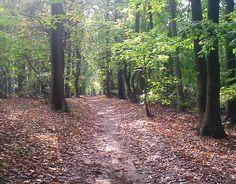 Oak woodland in Sherwood Pines