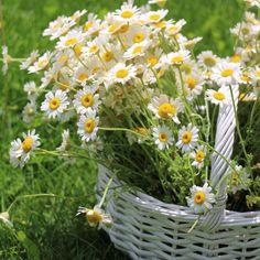 where daisy lives...