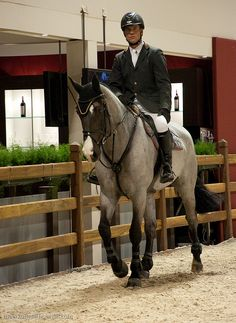 Roan sport horses are not seen very often on the jumping or dressage arenas. Neither are palominos, buckskins, tobianos. Cute Horses, Pretty Horses, Horse Love, Horse Girl, Beautiful Horses, Dressage, Horse Riding Clothes, English Riding, Horse Photos