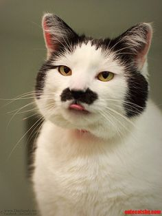 She has a beautiful mustache and sideburns… - http://cutecatshq.com/cats/she-has-a-beautiful-mustache-and-sideburns/(ᵔᴥᵔ)