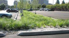 CCF OCPM Green Parking Lot