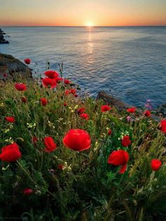 Red poppies by the sea Beautiful Sunset, Beautiful World, Beautiful Flowers, Beautiful Places, Beautiful Pictures, Landscape Photography, Nature Photography, Image Nature, Unique Wall Art