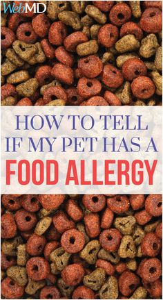 Just like humans, dogs can have food allergies, too. And like humans, those allergic responses can range from itchy and irritating to severe and dangerous.