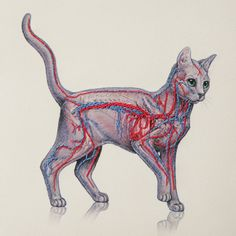Cat Anatomy Journal. Embroidered A5 Notebook. by FabulousCatPapers