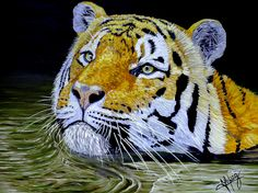 Tiger 24x18x1 inch oil on Gallery canvas**Tiger. Original wildlife art. Strong, bold brushstrokes combined with vivid colours. A stunning original oil painting on canvas #tiger #oilpainting #sweeming #fineart #fauna #animals #wildlife #wild #africa #decoración #colorful #feline #stripe