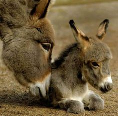 There comes a time in every donkey's life when you just need a nudge to get your back on your hooves.