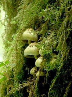 fungi, mushrooms, macro