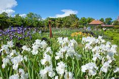 Plants, Gardens, Rose Bush, Potager Garden, Peony, Shrub, Flowers, Switzerland, Planters