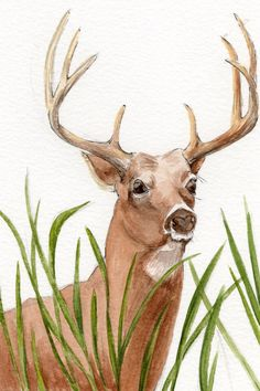 White Tail Deer Watercolor Painting Wildlife Art by KetturahsArt, $30.00