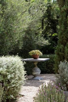 love the simplicity of this focal point--traditional landscape by Studio William Hefner emphasis photography there is emphasis on the one plant in the pot in the garden Garden Spaces, Plants, Beautiful Gardens, Gorgeous Gardens, Landscape Design, Outdoor Gardens, Garden Design, Garden Landscaping, Cottage Garden