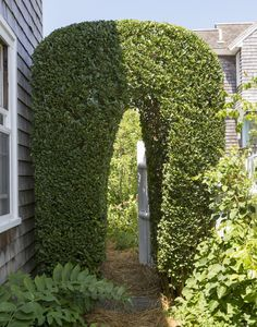 overgrown shrubs Privet by Matthew Williams for Gardenista