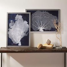 Coral Framed Print Collection