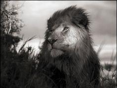 Nick Brandt fotografías de animales salvajes - Taringa!