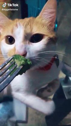 Funny Animal Comics, Funny Animal Jokes, Funny Cute Cats, Cute Baby Cats, Cute Little Animals, Funny Animal Videos, Cute Funny Animals, Funny Animal Pictures, Funny Dogs