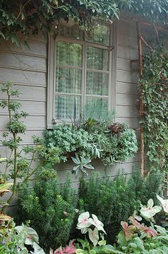 Succulent window boxes -